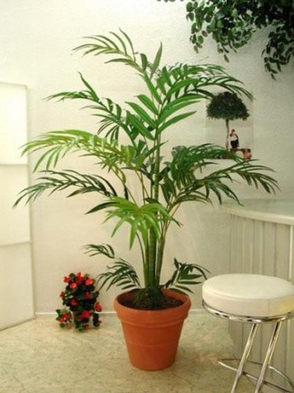 Utilizar plantas de interior en la decoraci n for Plantas para decoracion de interiores