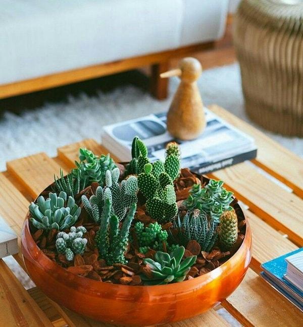 Centro de mesa hecho con cactus