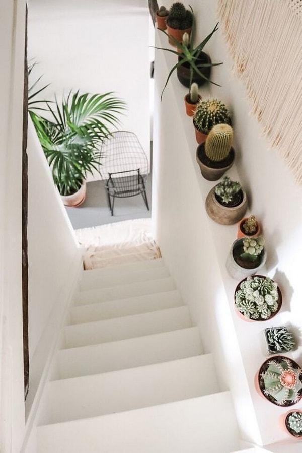 Ideas para decorar con cactus pequeños