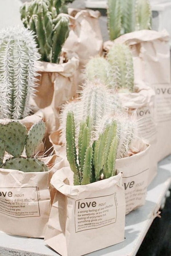 Cactus como souvenirs