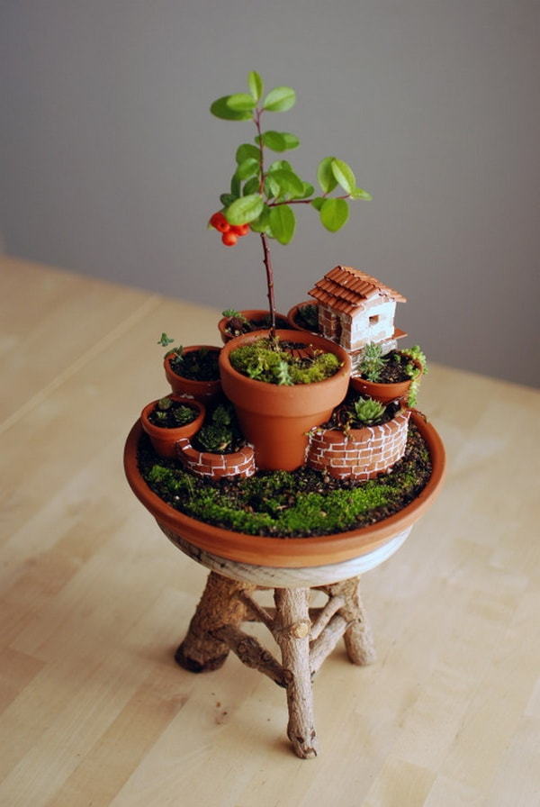 Mini jardines en macetas