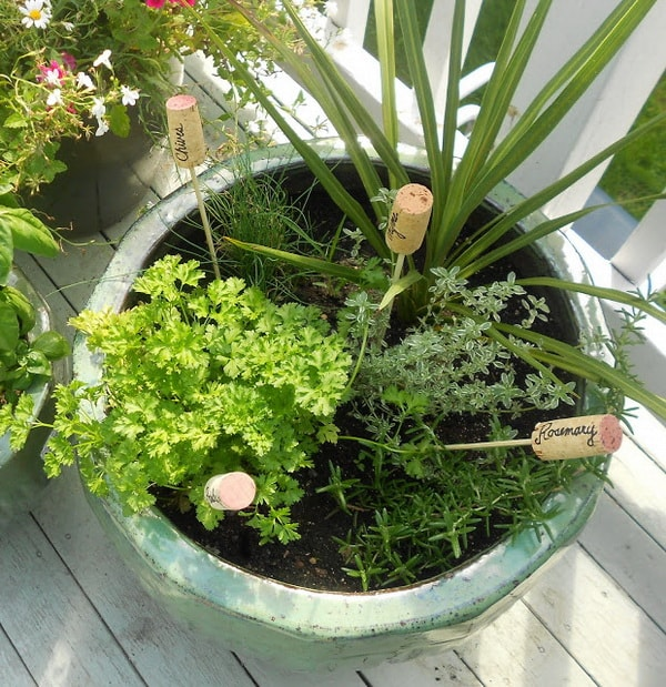 Plantas rotuladas