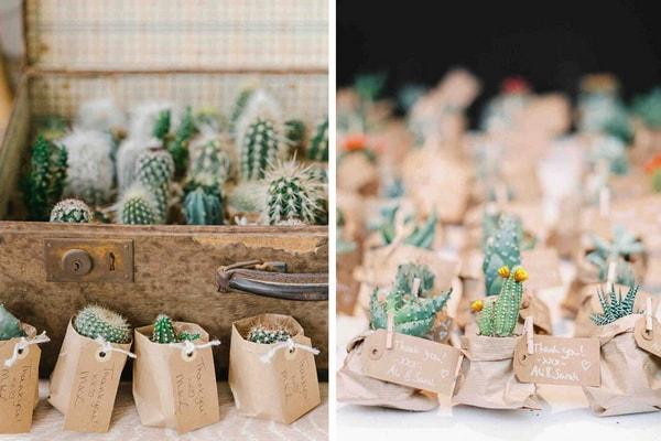 Cactus como souvenirs de fiestas