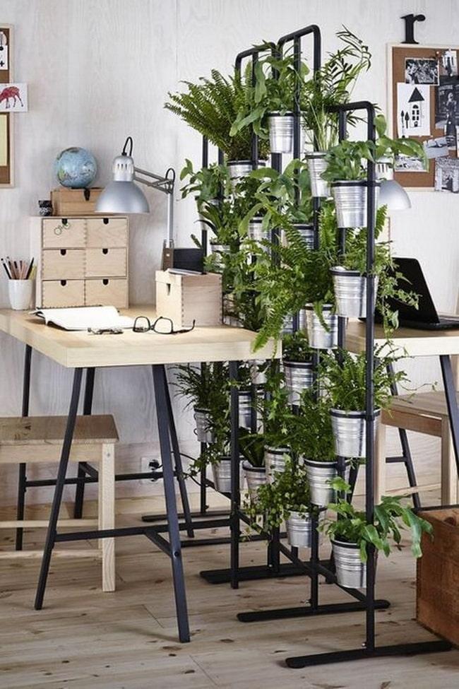 Separar ambientes con plantas
